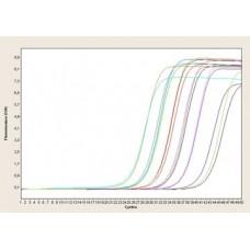 EvaGreen real-time PCR (qPCR) 2x Master Mixes